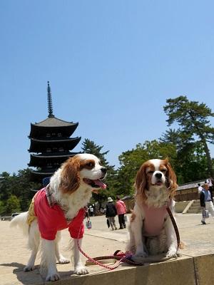 奈良町散歩6