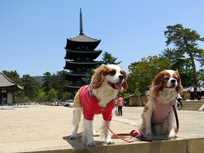 奈良町散歩7