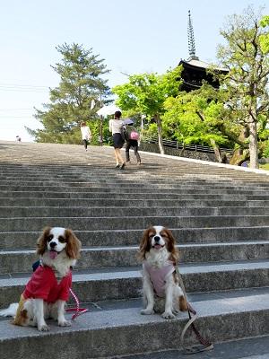 奈良町散歩16
