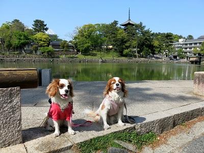 奈良町散歩17