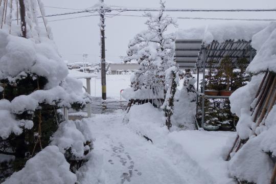 DSC06083yuki.jpg