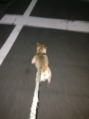 モグ散歩①