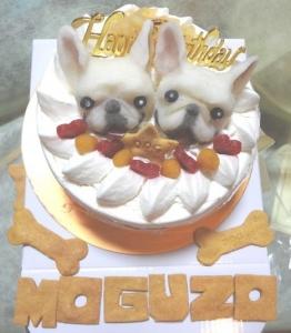 モグ・ケーキ