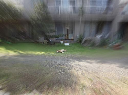 s-DSC01632.jpg