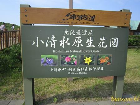 原生花園①