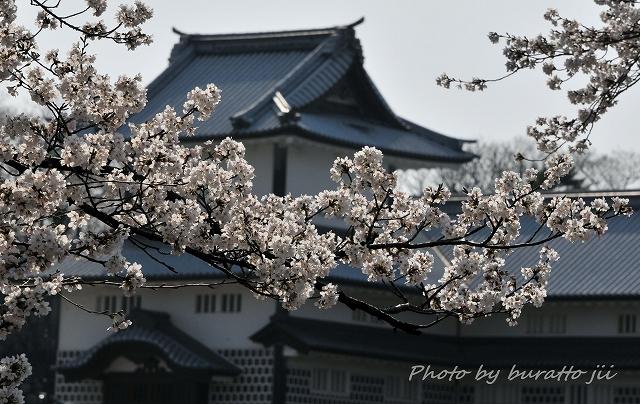 7.2013.04.04兼六園・金沢城 037