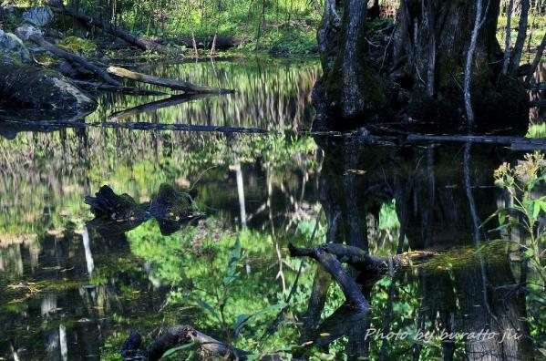 4HKD_猿留川線林道沿いの水たまり