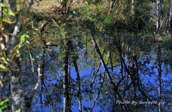 9HKD_8313コッタロ湿原の水たまり