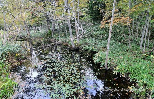 15HKD_1湖付近の小さな池_6湖か^^