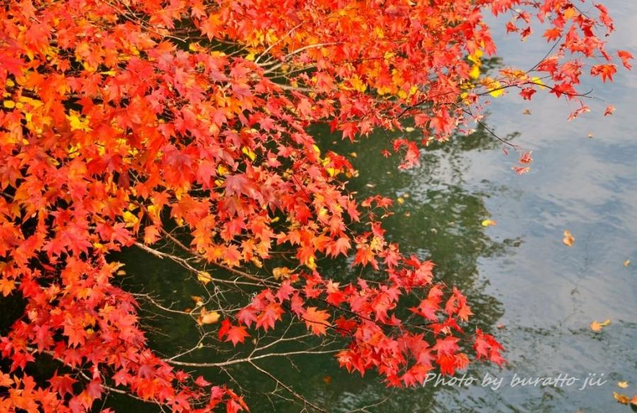 3HKD_新得町大雪橋から上岩松ダム湖の紅葉