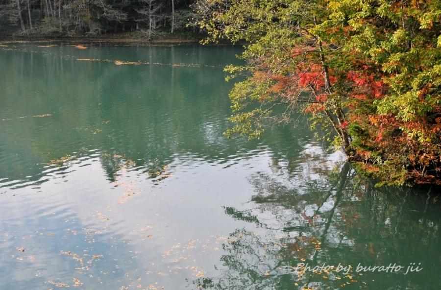 1HKD_新得町大雪橋から上岩松ダム湖の紅葉