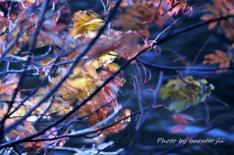10HKD_風に揺れる紅葉