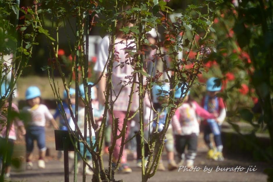 9KJM_金沢市総合運動公園のバラ園