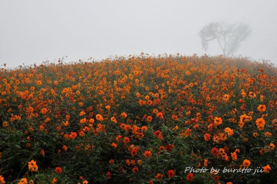 3HKD_アルパカ牧場の花畑