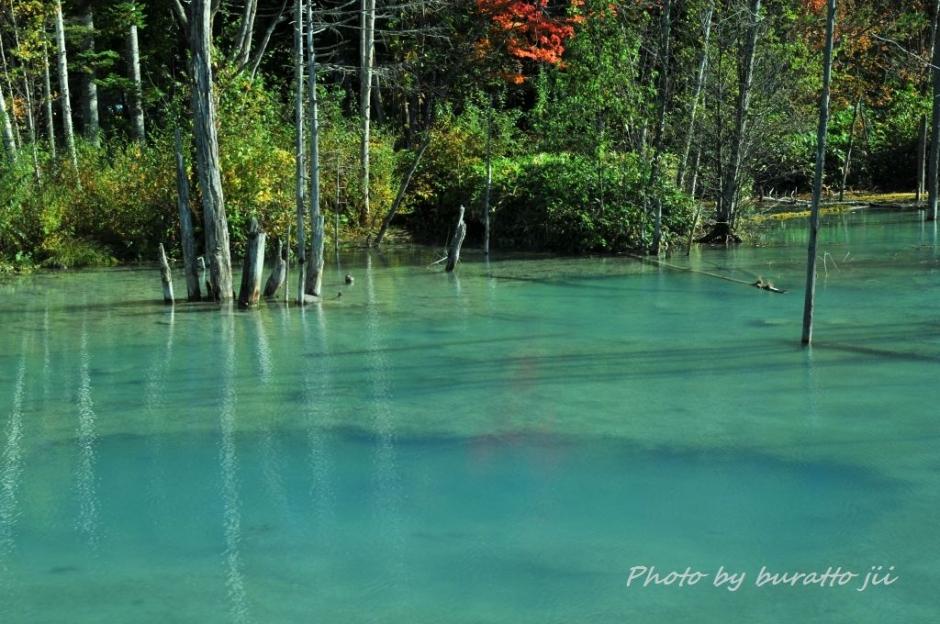 12HKD_白金の青い池