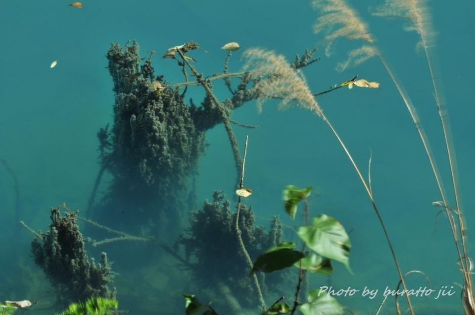 9HKD_白金の青い池