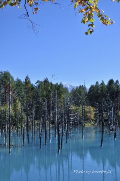 7HKD_美瑛町白金の青い池