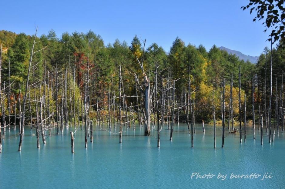 6HKD_白金の青い池