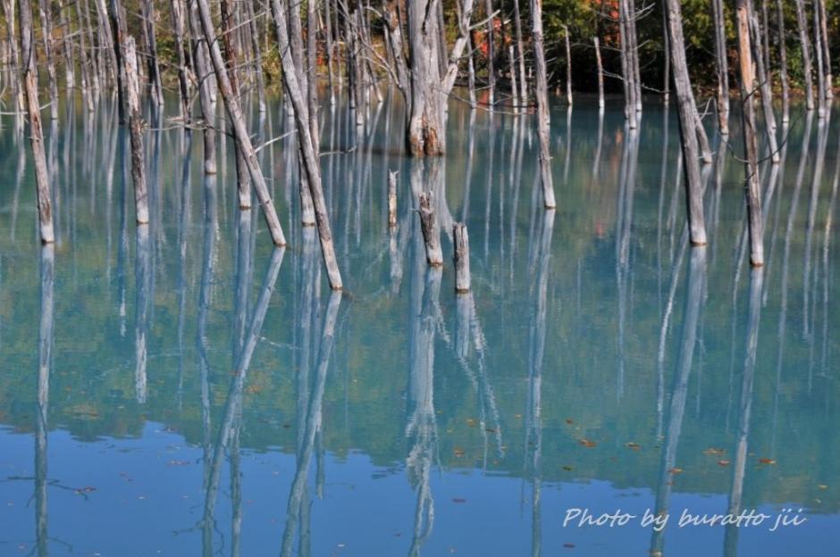 5HKD_白金の青い池