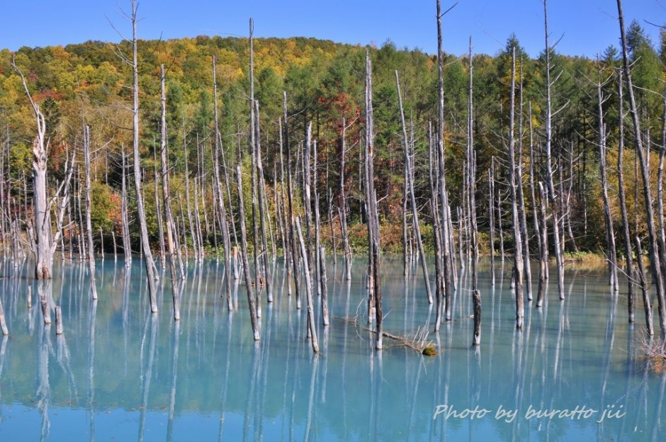 3HKD_白金の青い池