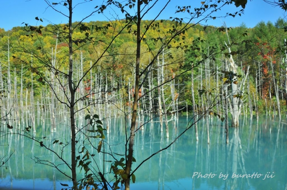 2HKD_白金の青い池
