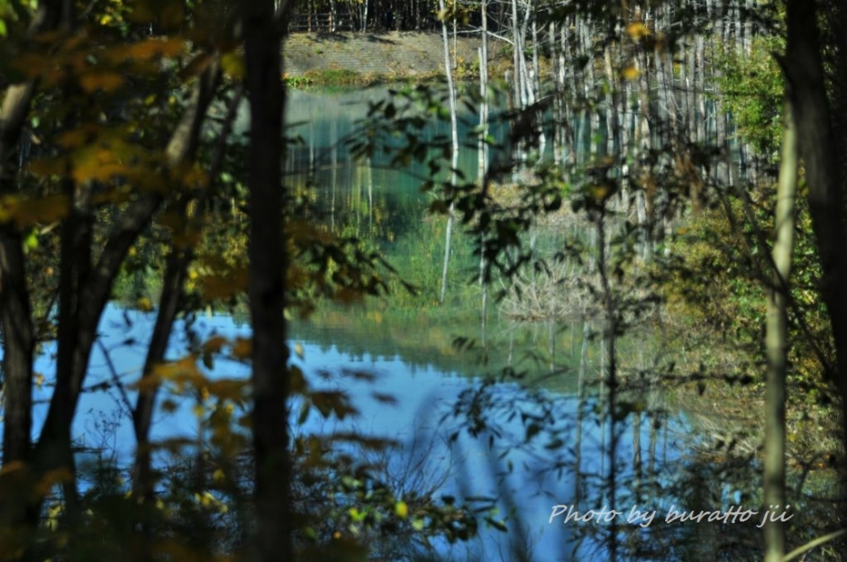 1HKD_白金の青い池