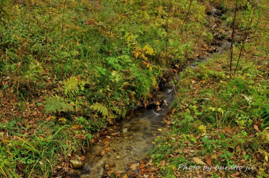 7池ケ原湿原