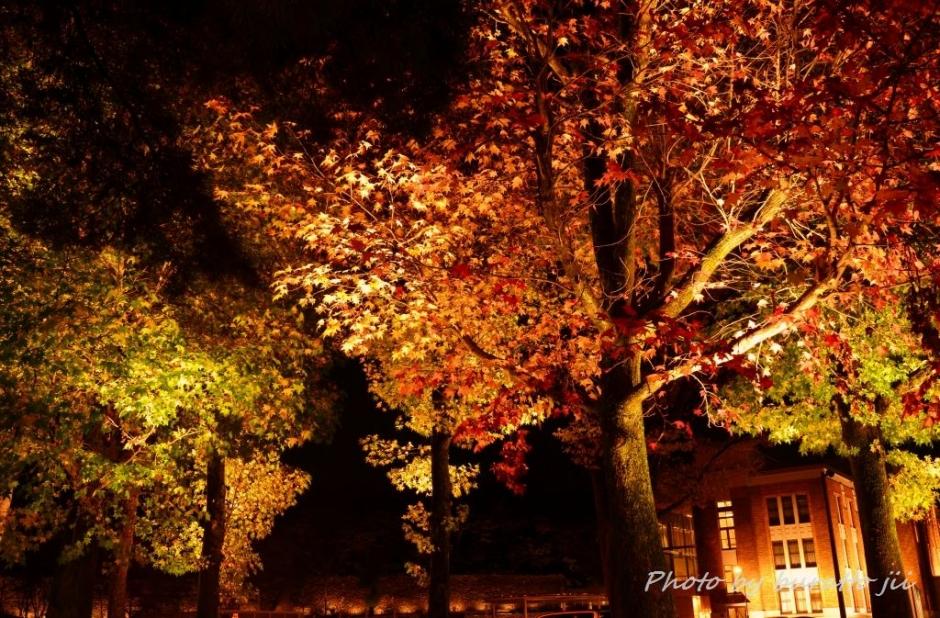 4広阪アメリカ楓並木20131109