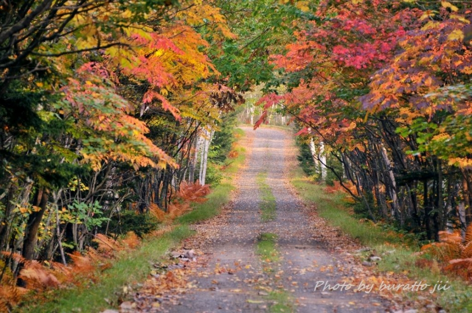 1HKD_キンム沼へ向かう林道