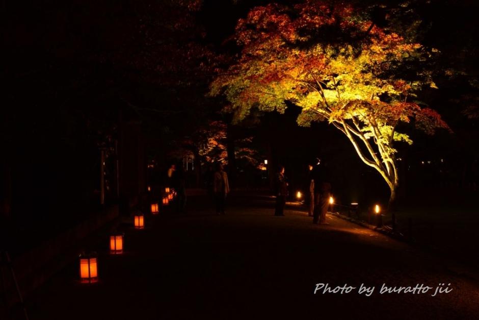 3.2013.11.16兼六園ライトアップKRE_1