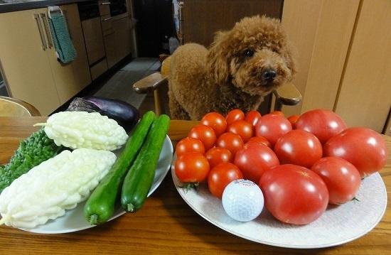 夏野菜収穫とブルポ