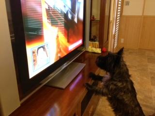 テレビにかぶりつきチップ
