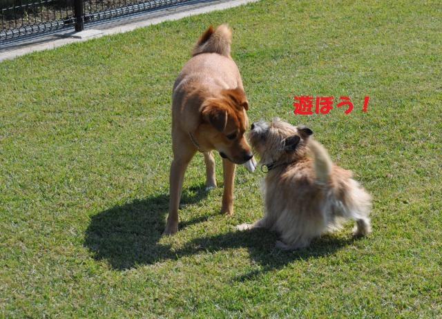 DSC_0006+(2)_convert_20131020115655.jpg
