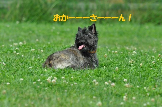 DSC_0040_convert_20130702192852.jpg