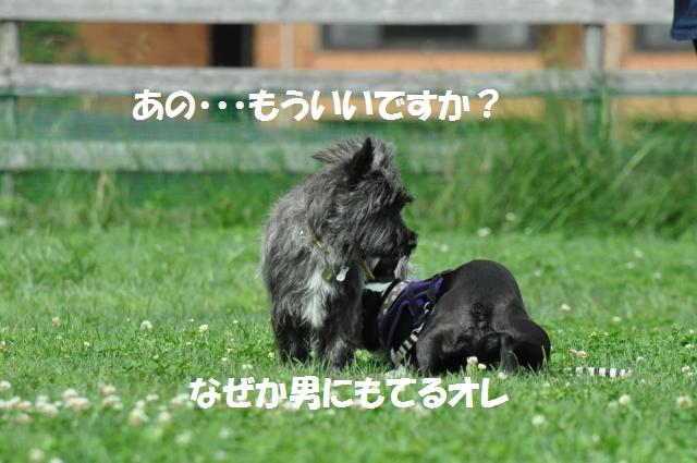 DSC_0043_convert_20130702192949.jpg