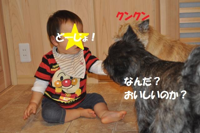 DSC_0086_convert_20130926232531.jpg