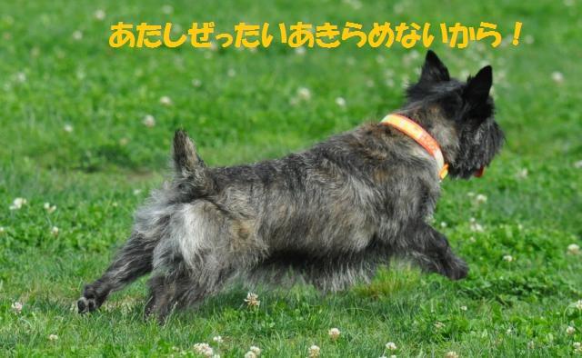 DSC_0091+(2)_convert_20130702193445.jpg