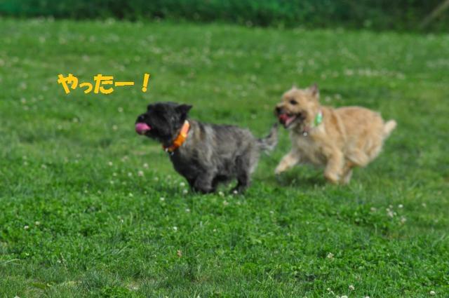 DSC_0101_convert_20130702193509.jpg