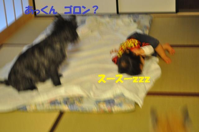 DSC_0102_convert_20130926233015.jpg