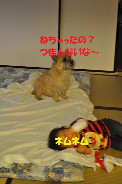 DSC_0105_convert_20130927222911.jpg
