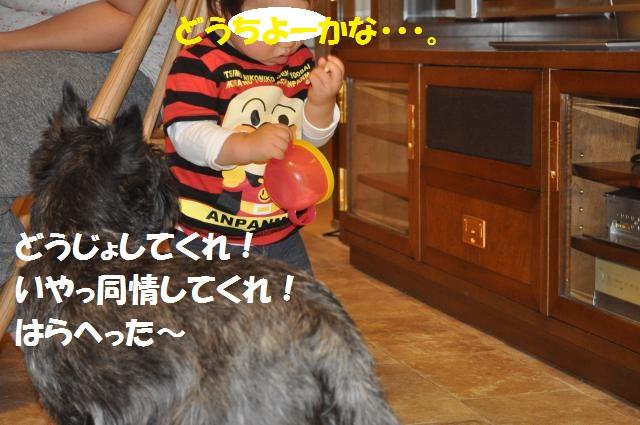 DSC_0109_convert_20130927223137.jpg