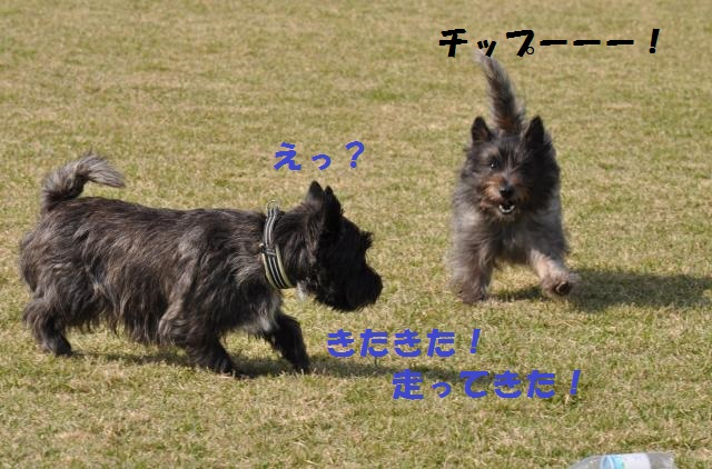 DSC_0149+(2)_convert_20131020095626.jpg