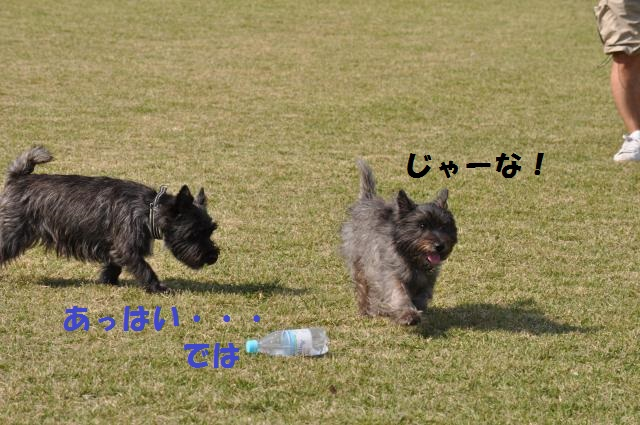 DSC_0151+(1)_convert_20131020095706.jpg