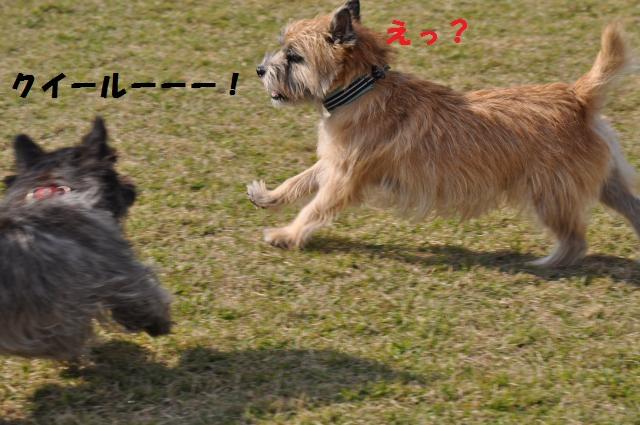 DSC_0155+(1)_convert_20131020095744.jpg