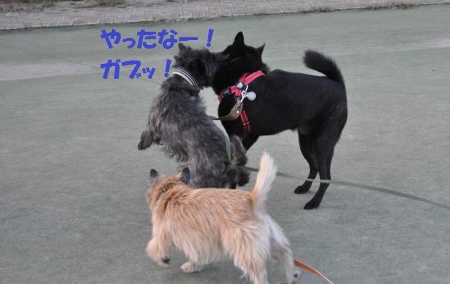 DSC_0169_convert_20130930014749.jpg