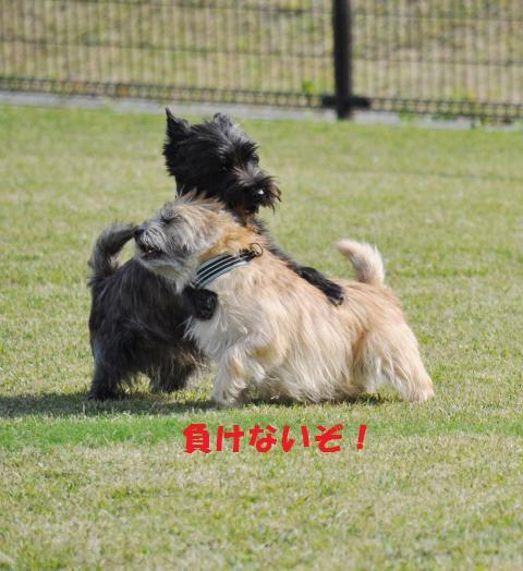 DSC_0184+(2)_convert_20131020220832.jpg