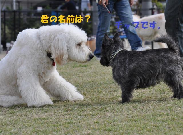 DSC_0201+(1)_convert_20131020221519.jpg