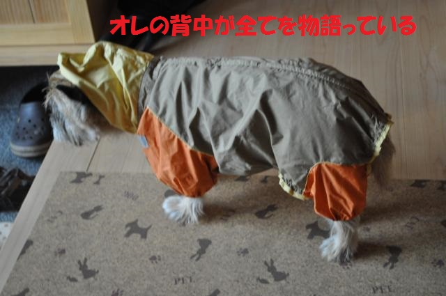 DSC_0203_convert_20131002223202.jpg