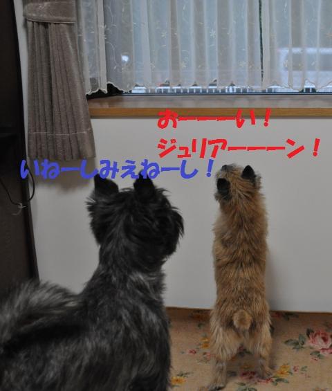DSC_0211_convert_20131003215014.jpg