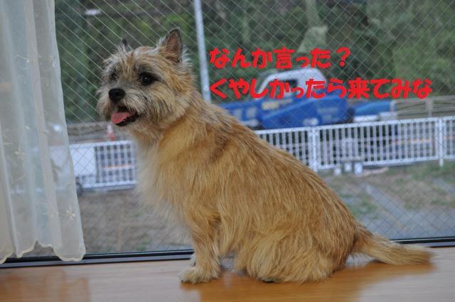 DSC_0223_convert_20131003215238.jpg